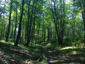Forest Hike in Elkhart Wisconsin