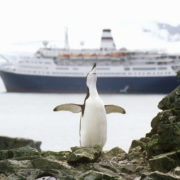 Cruise ship and penguin in Antarctica