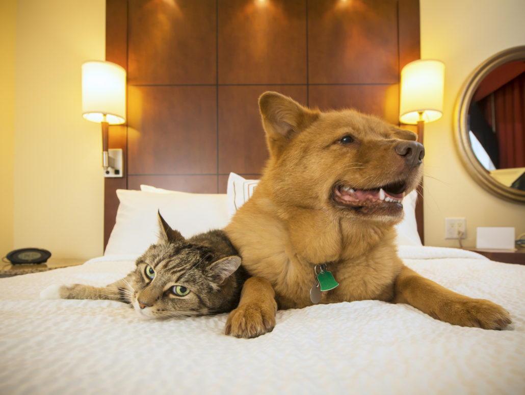 Cat and Dog together resting on bed of hotel room