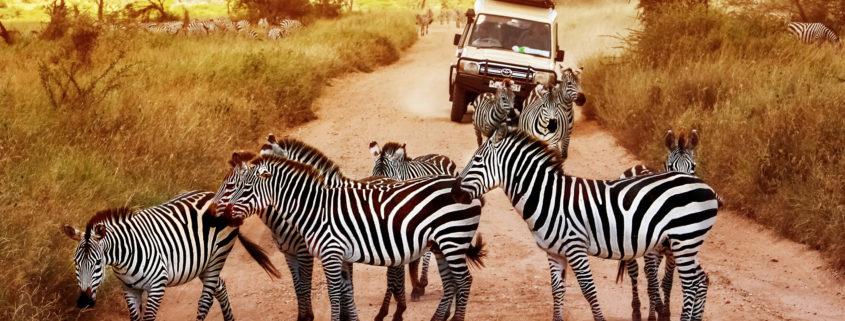Africa, Tanzania, Serengeti, zebras