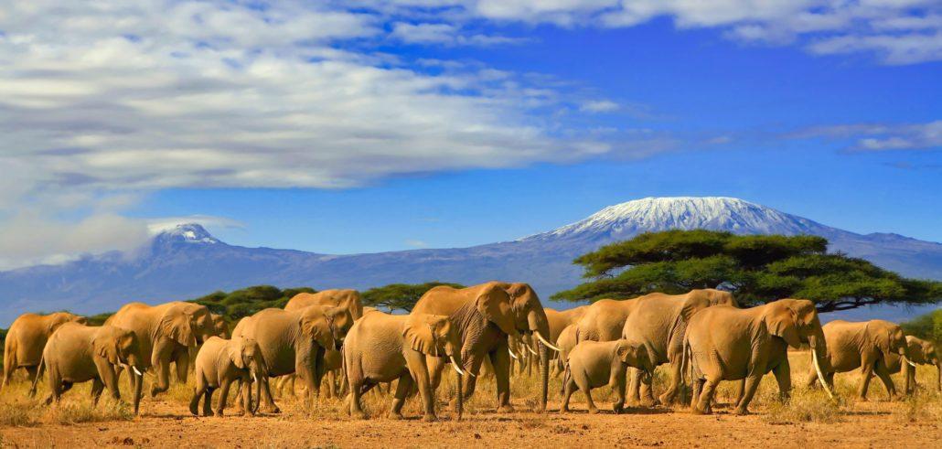 Kilimanjaro Tanzania, Africa elephants