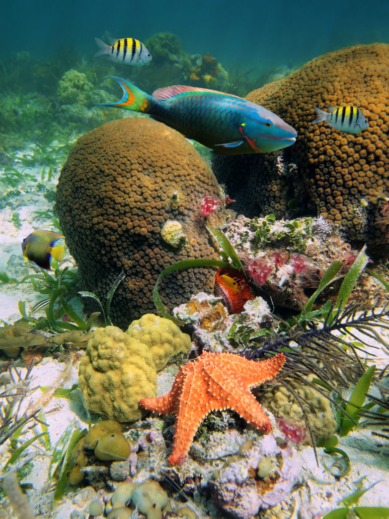 Marine life in Grenada, Caribbean