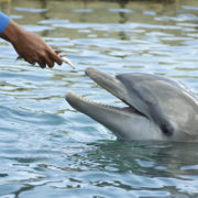 hand feeding dolphins at Florida resort