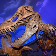 Dinosaur Exhibit at the Children's Museum in Indianapolis