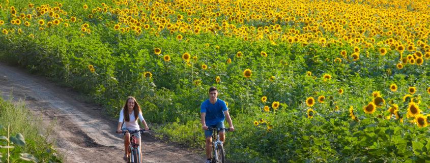 teens riding bikes through sunflower field on vacation