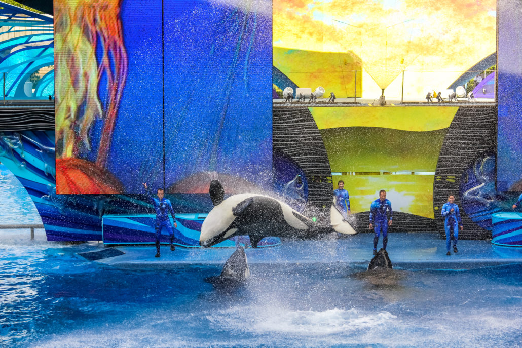 Killer Whale Show at Seaworld in Florida