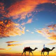 Dubai, Camels, Beach Night sky