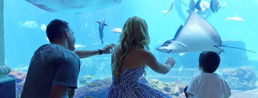 Bahamas family aquarium