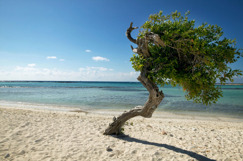 Fofoti Tree on Baby Beach
