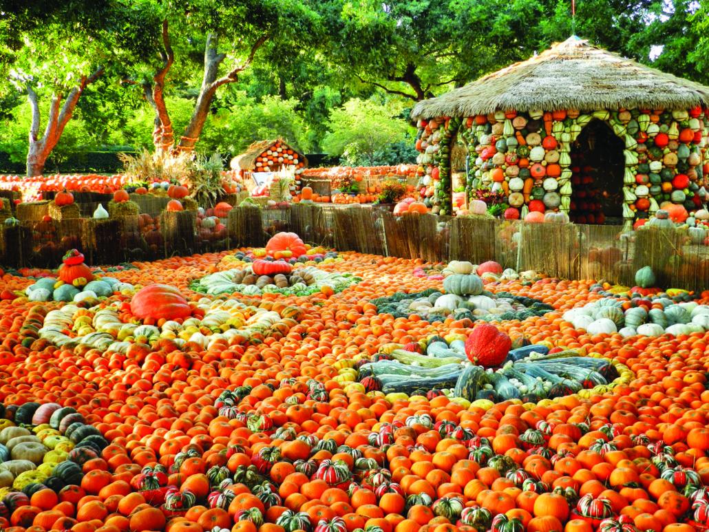 Holiday - Dallas Arboretum