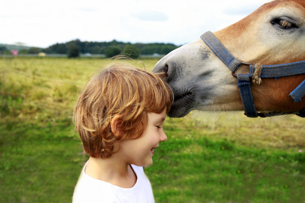 Horse and kid at stable