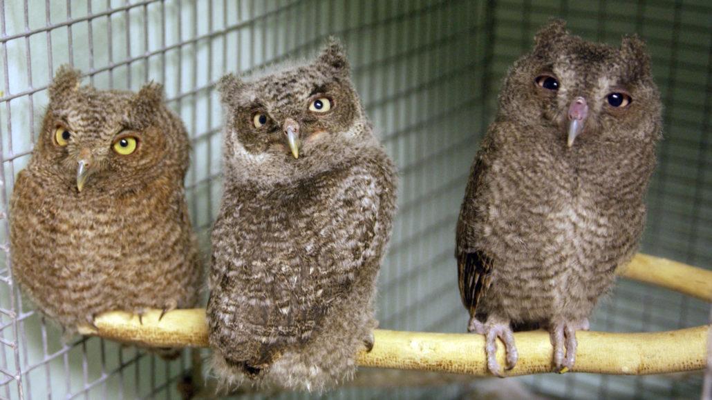 wildlife sanctuary owls