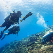 Learning to SCUBA dive together in the Ocean