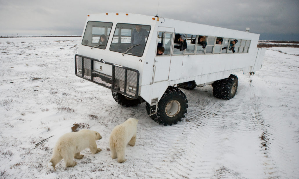 Arctic safari. Canada. Churchill National Park.