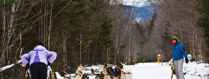 A lesson in Mushing, Muddy Paw dog sledding, Jefferson NH copy