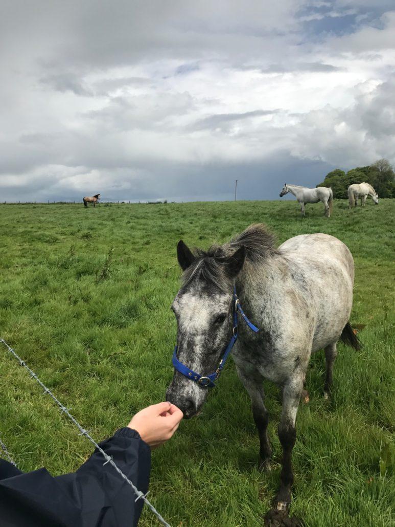 Ballyfin horses Back in Time