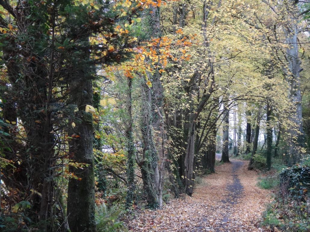 Dromoland path