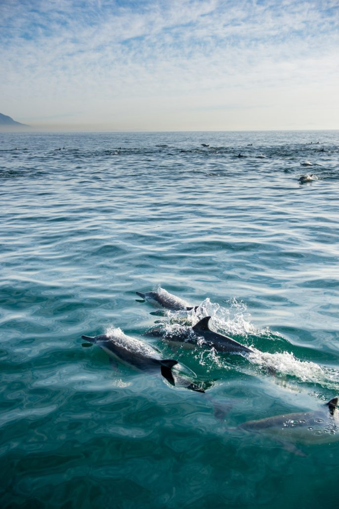 Dolphin cruise in Pacific Ocean