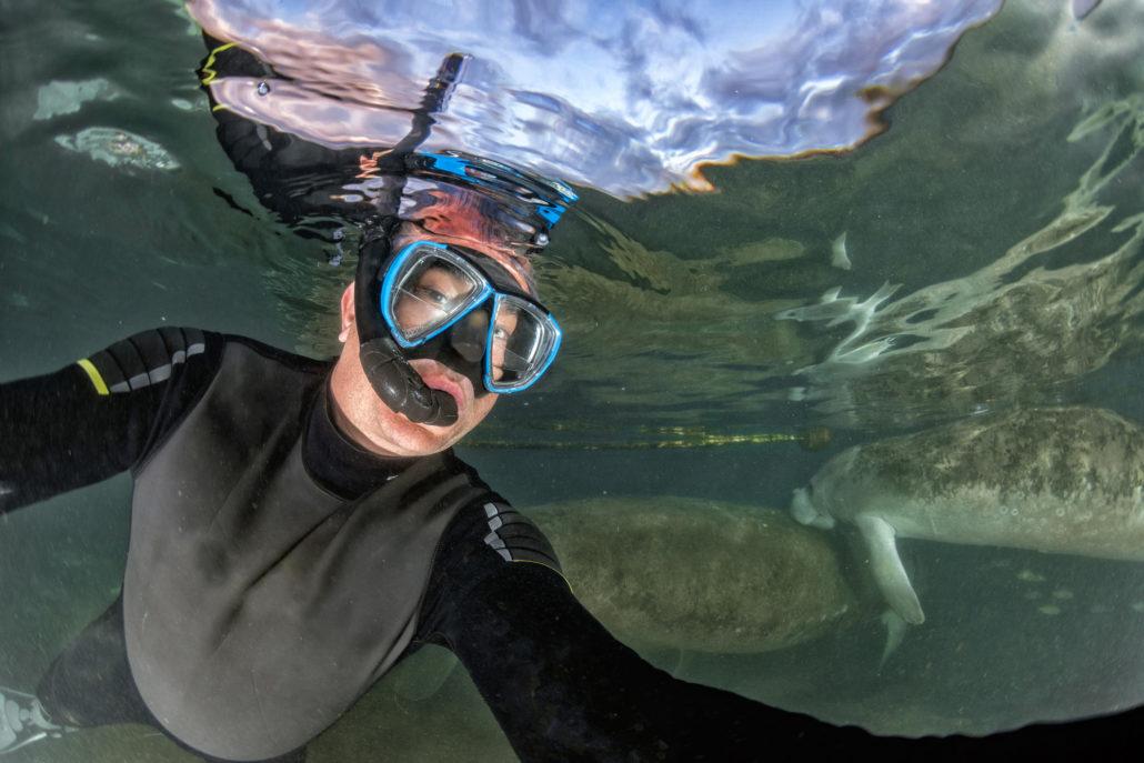 Florida manatee close up portrait approaching snorkelist