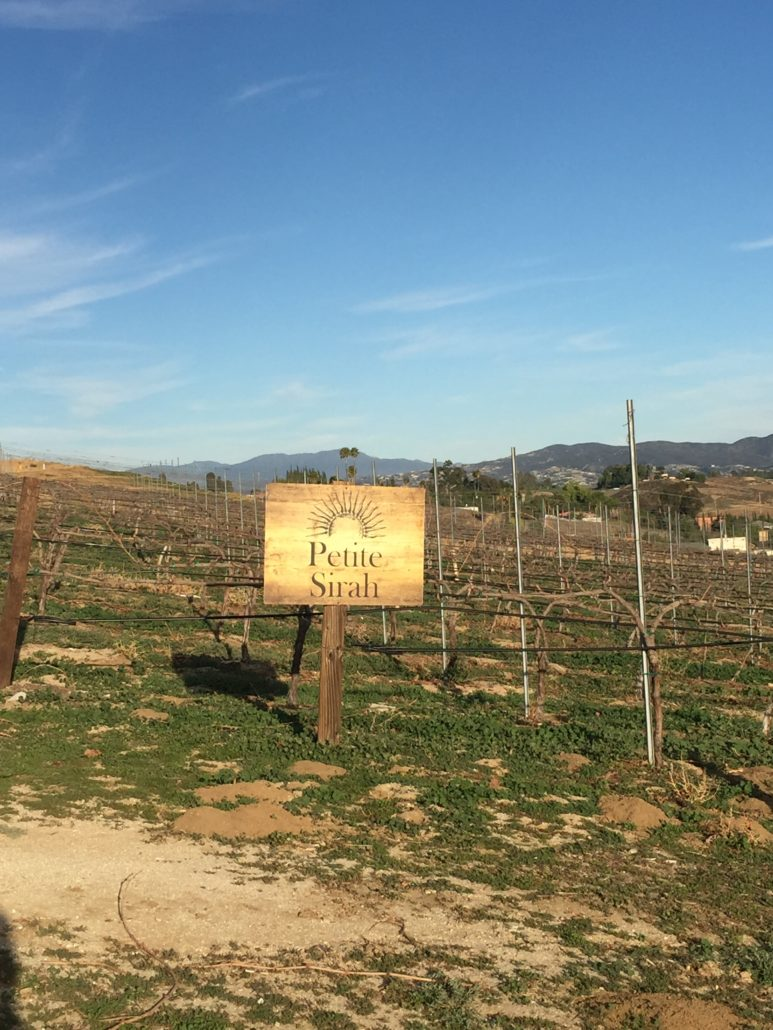 Temecula vineyard view with sign