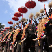 Thrissur Pooram Elephant Festival in India