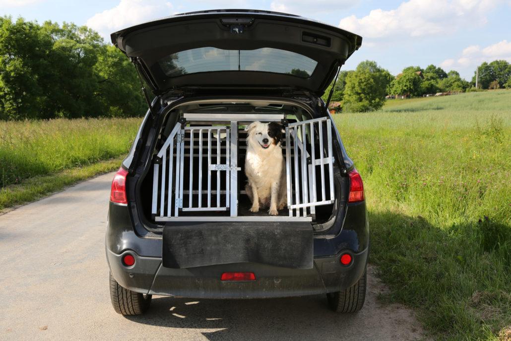 dog preparing for a road trip