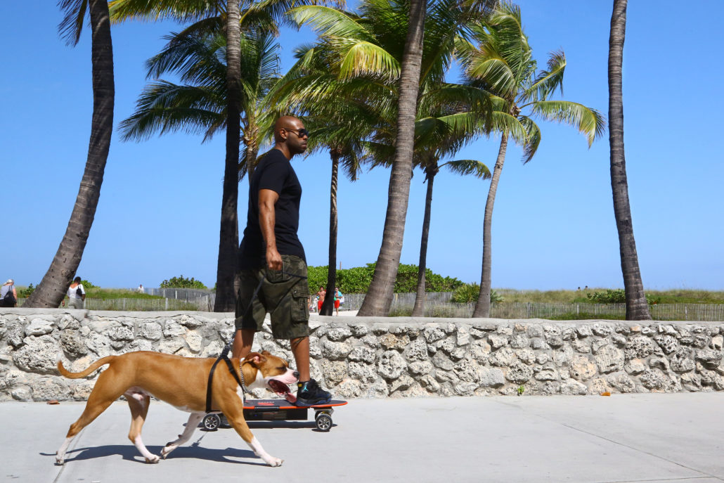 Skateboarder with dog in South Beach