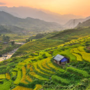 Vietnam Rice Paddy Field