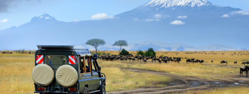 Safari game drive with the wildebeest