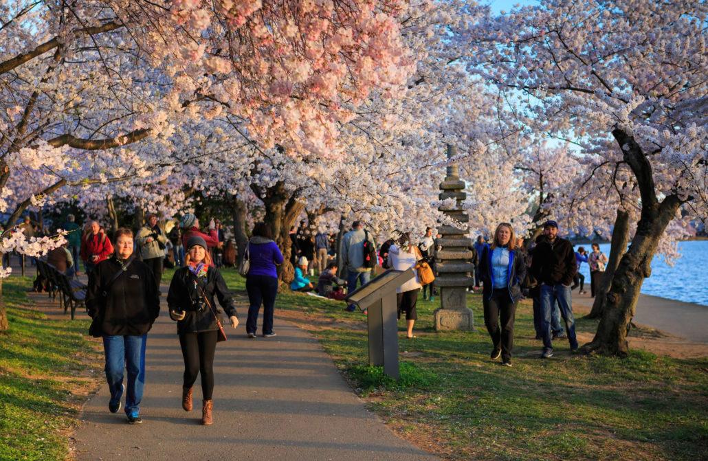 Washington DC National Cherry Blossom Festival