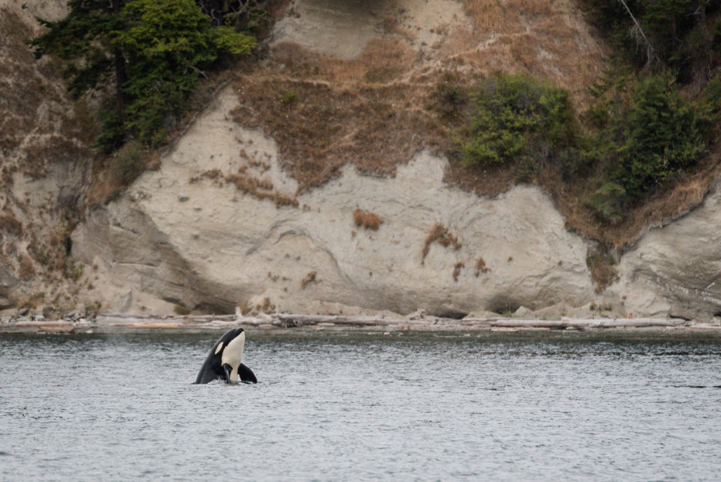 Whale watching in Washington State