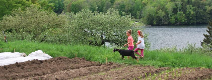 Farm Wilderness
