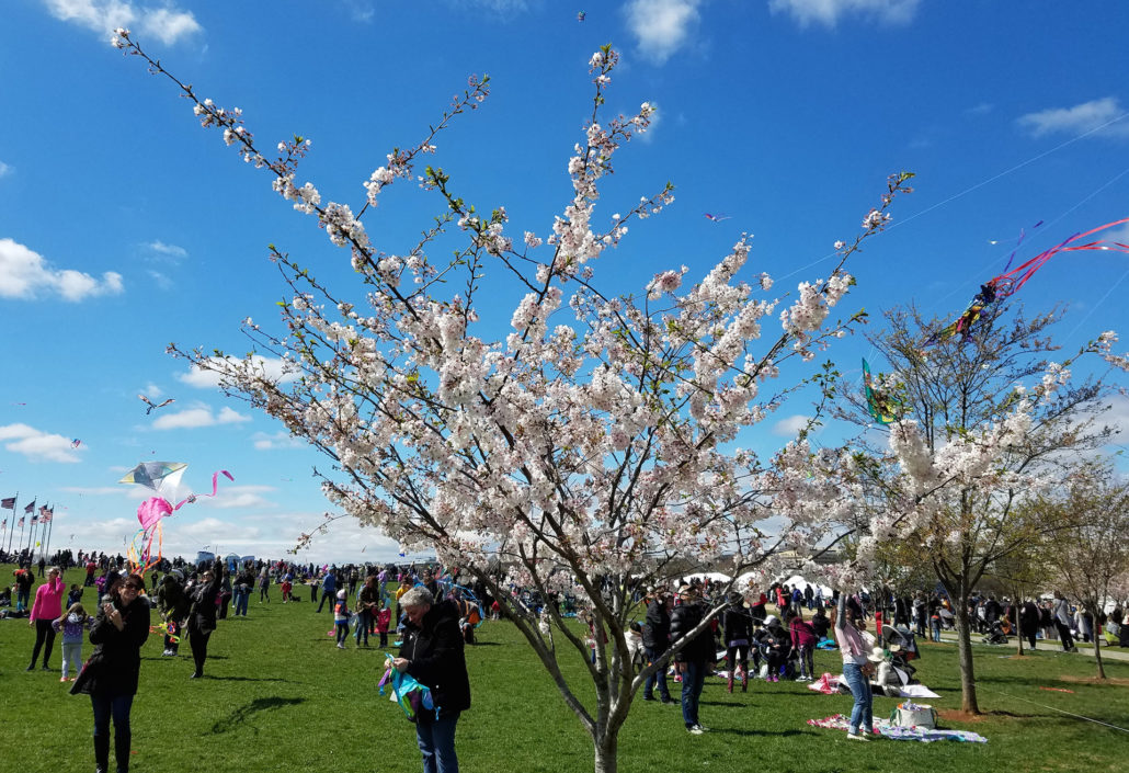 Cherry Blossom Kite Festival in Washington, DC.