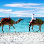 Dubai Beach Camel Ride