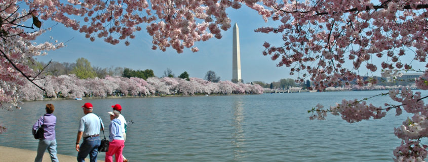 Tidal Basin, Washington DC, Cherry Blossoms