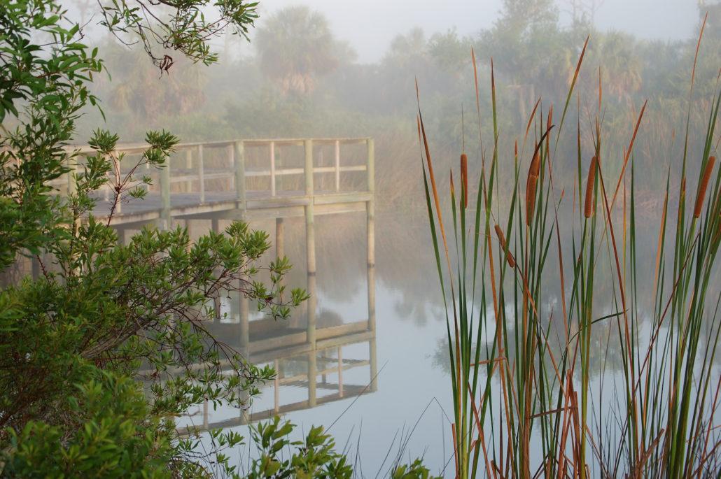 Morning Mist over Environmental Center