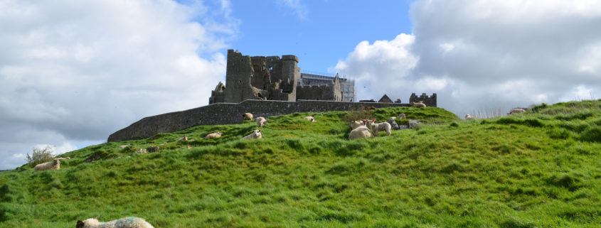 Sheep Grazing in Front of the Rock of Cashel