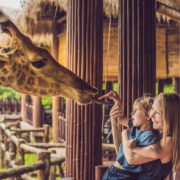 mother and son watching and feeding giraffe in zoo