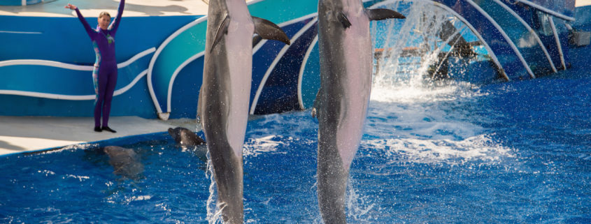 Dolphin show San Diego Seaworld