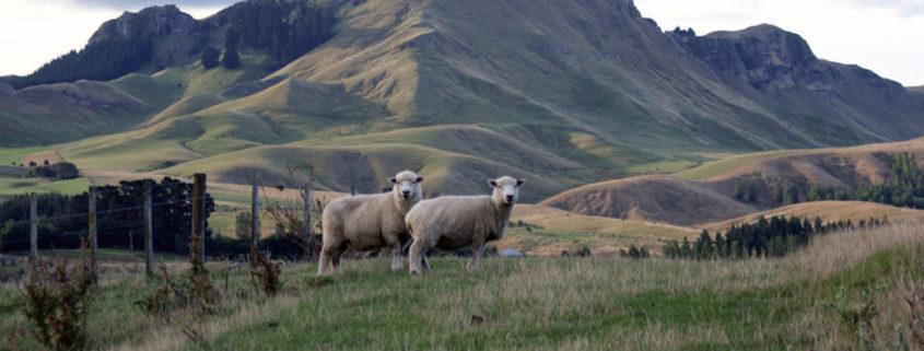 Tamata Peak, Hawke's Bay, NZ