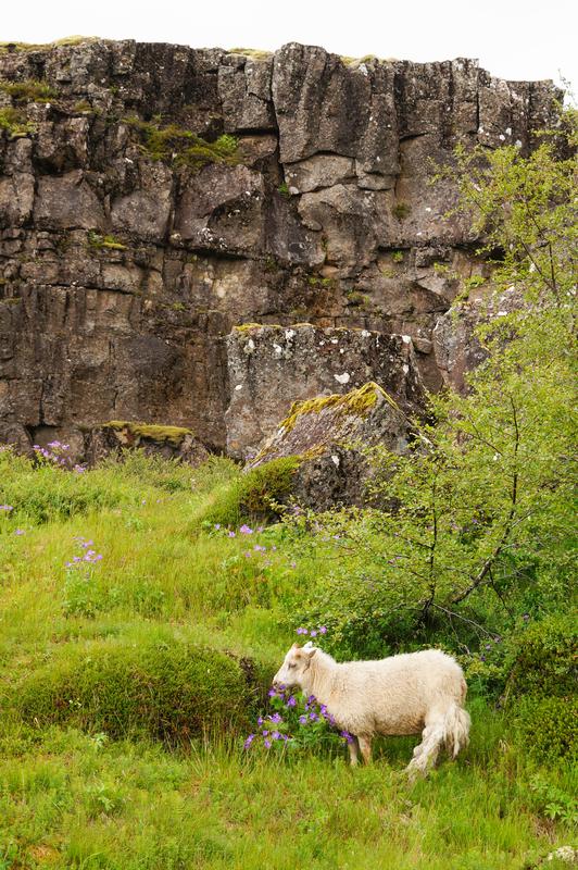 Thingvellir National Park,Iceland