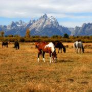 Horse Ranch © Kirkgeisler | Dreamstime.com