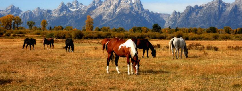 Horse Ranch © Kirkgeisler   Dreamstime.com