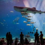 Georgia Aquarium with the people
