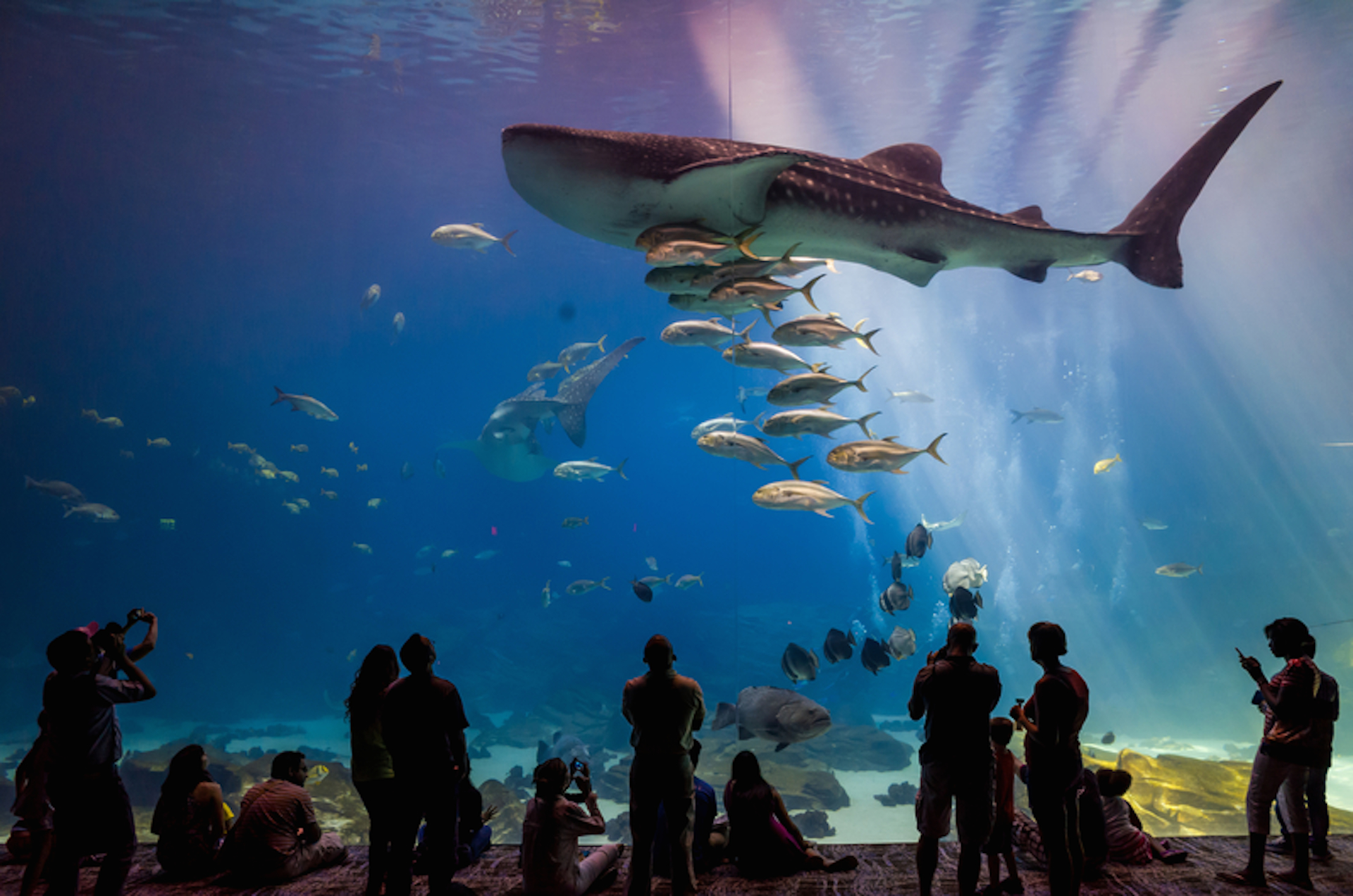 dive into these aquariums across the united states wherever family