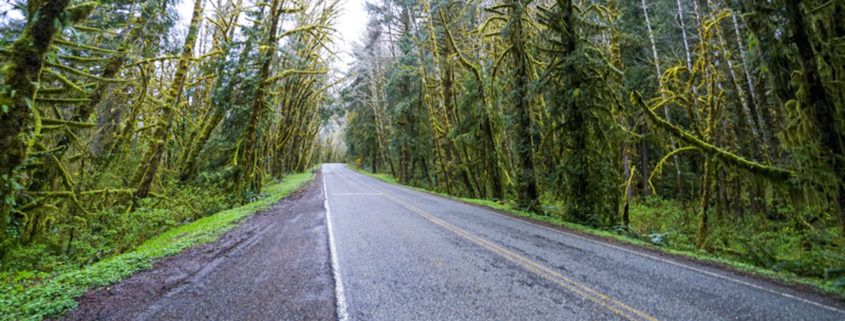 Hoh Road in the rain forest of Olympic National Park - FORKS - WASHINGTON