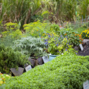 Volontourism Herb Garden