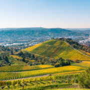 Stuttgart Germany Grabkapelle Vineyards
