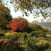 NYC: Fort Tryon Park Gardens