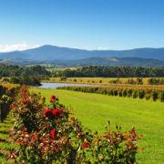 Yarra Valley near Melbourne, Australia